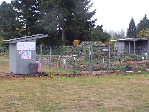 One of Olympia's community gardens
