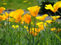 Spring's Abundant Sanctuary