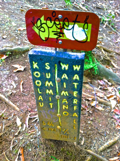 Butt-kicking Hiking on Oahu, Hawaii: the Ko'olau Summit Trail (via Mañana Trail)