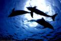 Marine Mammal Bradycardia: The Diving Response