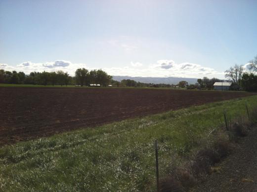 Freshly Furrowed Field