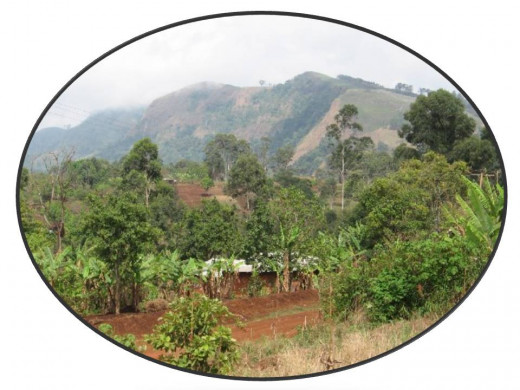 Pinyin, Cameroon, Africa
