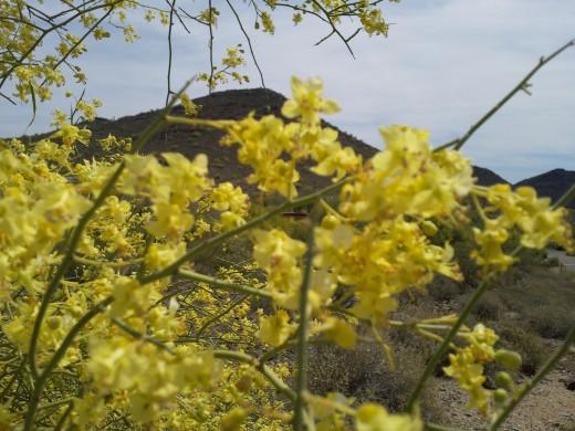 Thunderbird Mountain Park - Glendale, AZ