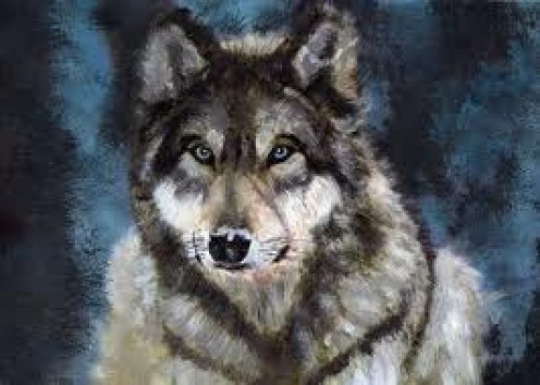 The Gray Wolf is located in America and mainly in Mexico. Canines are descendants of the wolf and it would be horrible to see these creatures disappear.
