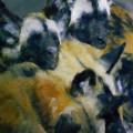 Are African Wild Dogs Endangered? Painted Dog Facts.