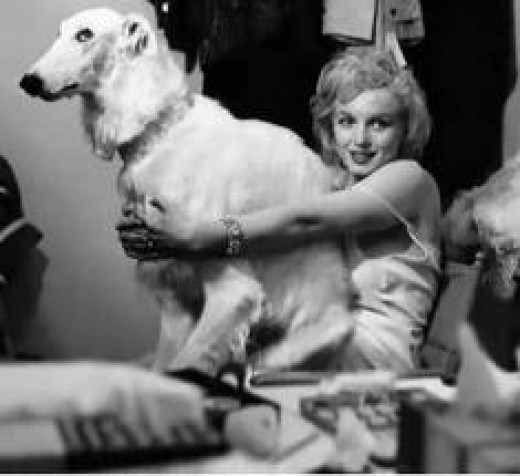 Marilyn loved dogs, too.