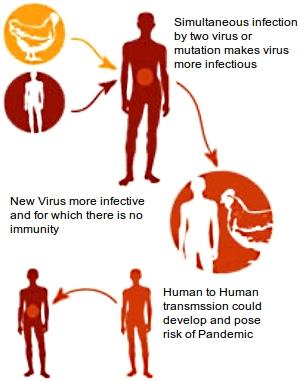 How mutations and combinations and genetic material can lead to the ability for human-to-human transmission