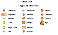 Why are Many Alkaline Foods, Like Citrus Fruits, Actually Acid