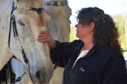 Iron Gait Percheron Horse Rescue Farm