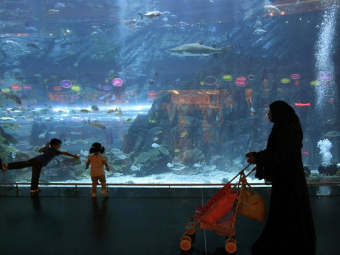 Once in a while, small children bump their little noses against the glass walls with an urge to be in the water, unaware that there is an artificially made border.