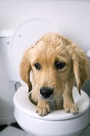 Poor dog.