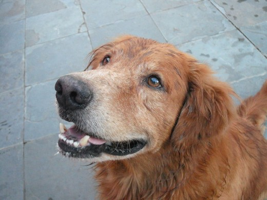 Old dogs are some of the best pets known to mankind, but they may need a little extra care.