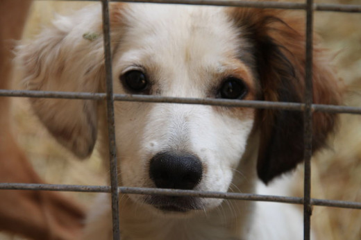 Most dogs in shelters are even-tempered, healthy animals that make excellent pets.