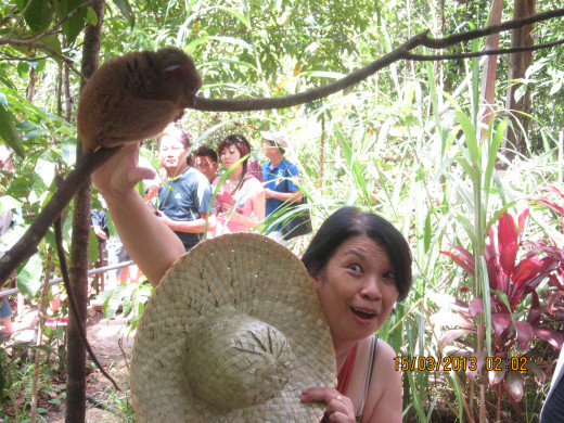 I pretend to catch a tarsier. In truth, we aren't allowed to touch them, as they are very sensitive creatures.
