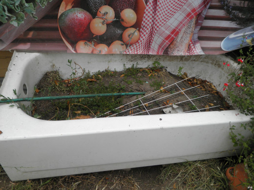 The bath tub I use for flowers, plants, bulbs and vegetables. I'm thinking of planting sweet peas in them this year and train them on a trellis.