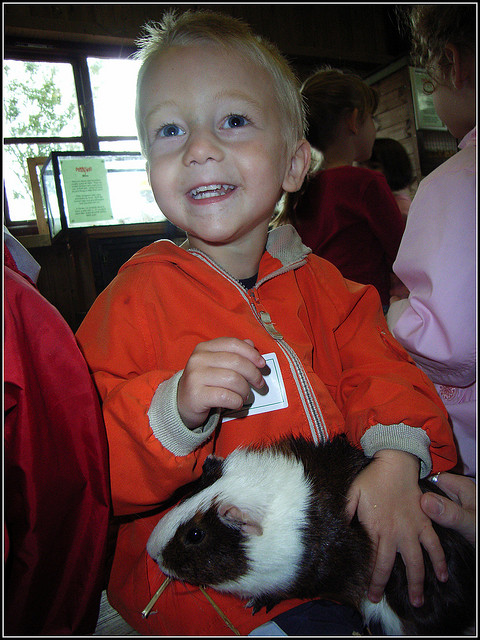 Child and Guinea-Pig / Cavy