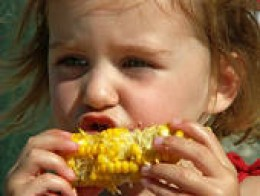 Feeding our kids ? corn. Is it safe any more?