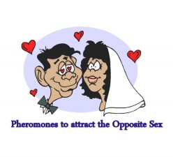 Pheromones Cologne to attract the same Sex and the Opposite Sex