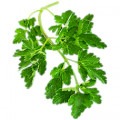 Infusions of parsley(a diuretic) can be helpful against fluid retention.