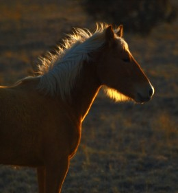 Young foal on the Rez