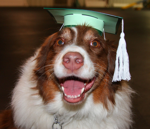 Don't forget a graduation party decoration or party favor for the dog!