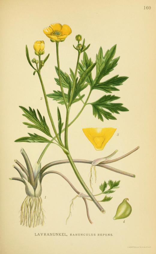 Billederafnorden-[1800's}