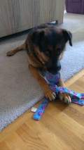Top 5 Dog Toys (to keep your dog busy and happy when he's home alone)