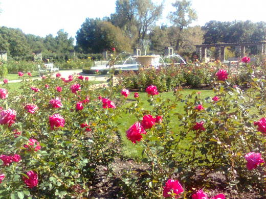 Rose Garden and Fountains at Loose Park