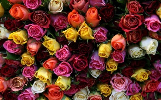 Different Coloured Roses