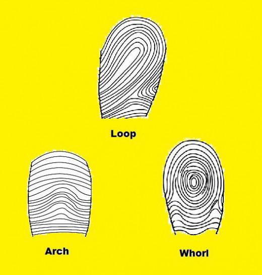 Different main type of fingerprint ridge patterns