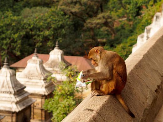 Monkey with potato chips