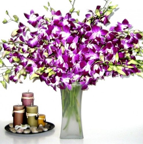 Look at the vibrant colors of these purple orchid flowers. Aren't they just lovely?