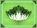 Delicious Bok Choy Recipes