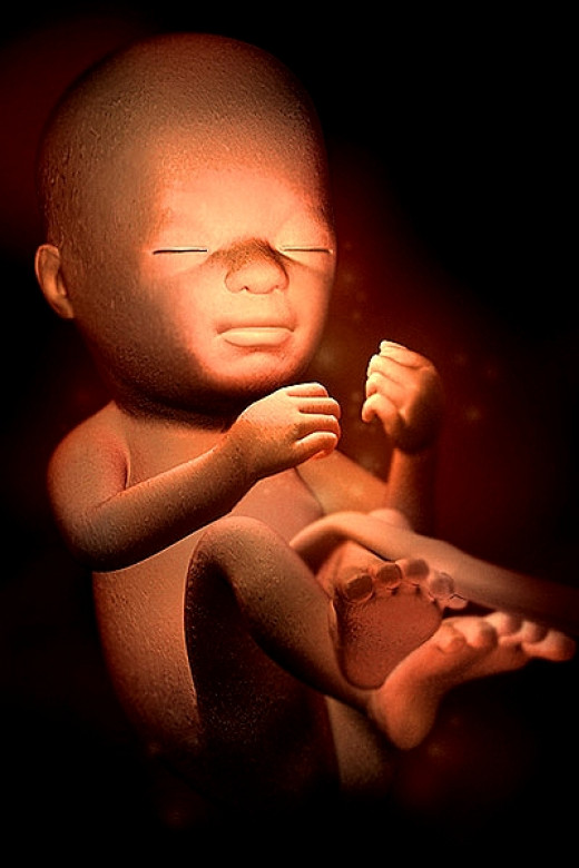 babies respond to sounds in the womb