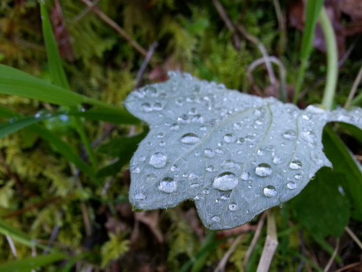 Water drops on leaves are always cool looking.