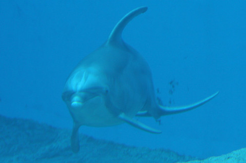 The controversy surrounding dolphin assisted therapy dat