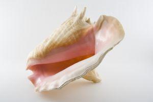 A Mascot of the Conch Republic.