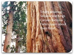 Sequoia and Kings Canyon National Parks, California ~ General Sherman Tree and More