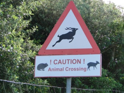 Watch out for animals-Zebra Crossing?
