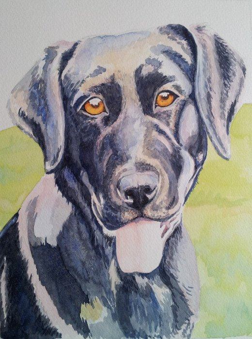"Memories of Molly, watercolor (work in progress) 14 x 11""  Posthumous Portrait of my parents' black lab, Molly"