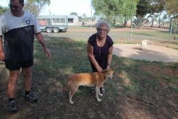 With a dingo.