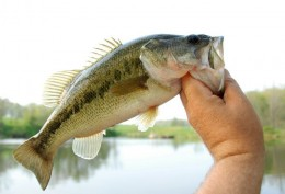 Fishing Trip Photos