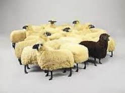 Ten Ways Indicating That You're Either the Black Sheep or Odd One in  Your Family
