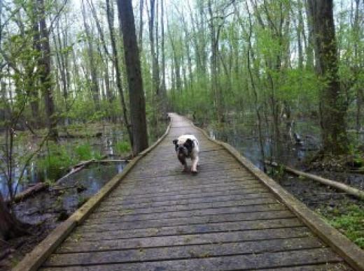 Argus at the Arboretum, Guelph, Ontario