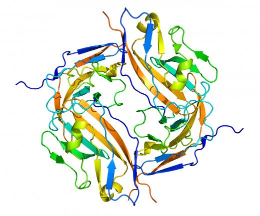 A drawing of the CD47 protein.