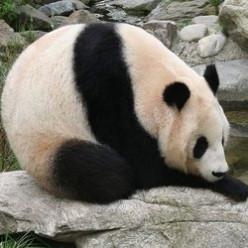 GOOGLE PANDA UPDATE | 2014