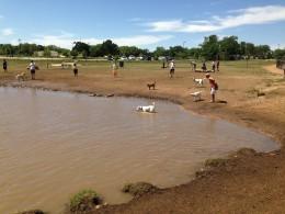 Cedar Park Bark Park Dog Lake - Cedar Park TX
