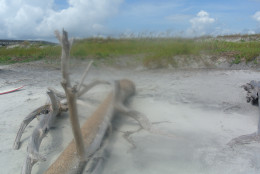 Little Talbot Island in Jacksonville, FL