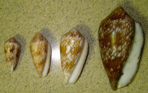Reverse of Textile Cones