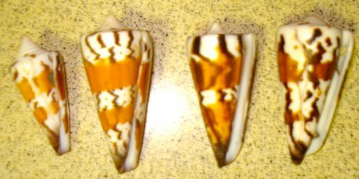 Reverse of General Cones